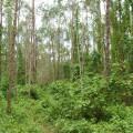 """Entrevista: """"Los recursos genéticos forestales en el mundo no han tenido la atención que se merecen"""""""