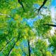Importantes mitos forestales que se deberían conocer