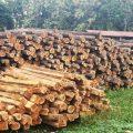 Productores ecuatorianos lograron acreditación para exportar teca a la India