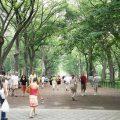 Los árboles mejoran la salud de las personas