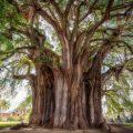 Existen varias especies de árboles en el mundo