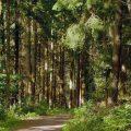 La importancia de cuidar los bosques para la mitigación del cambio climático