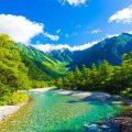 Se plantarán 100 millones de árboles en Nueva Zelanda cada año con el propósito de combatir el cambio climático
