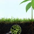 Los árboles se ayudan entre sí e intercambian carbono