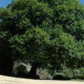 El Planeta alberga 60.065 especies de árboles