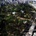 Elegir los árboles adecuados limpia más el aire de la ciudad, según expertos