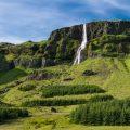 Islandia está reforestando sus bosques