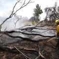 Se registra incendio forestal en California