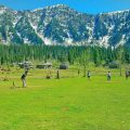 Pakistán plantará 10 mil millones de árboles
