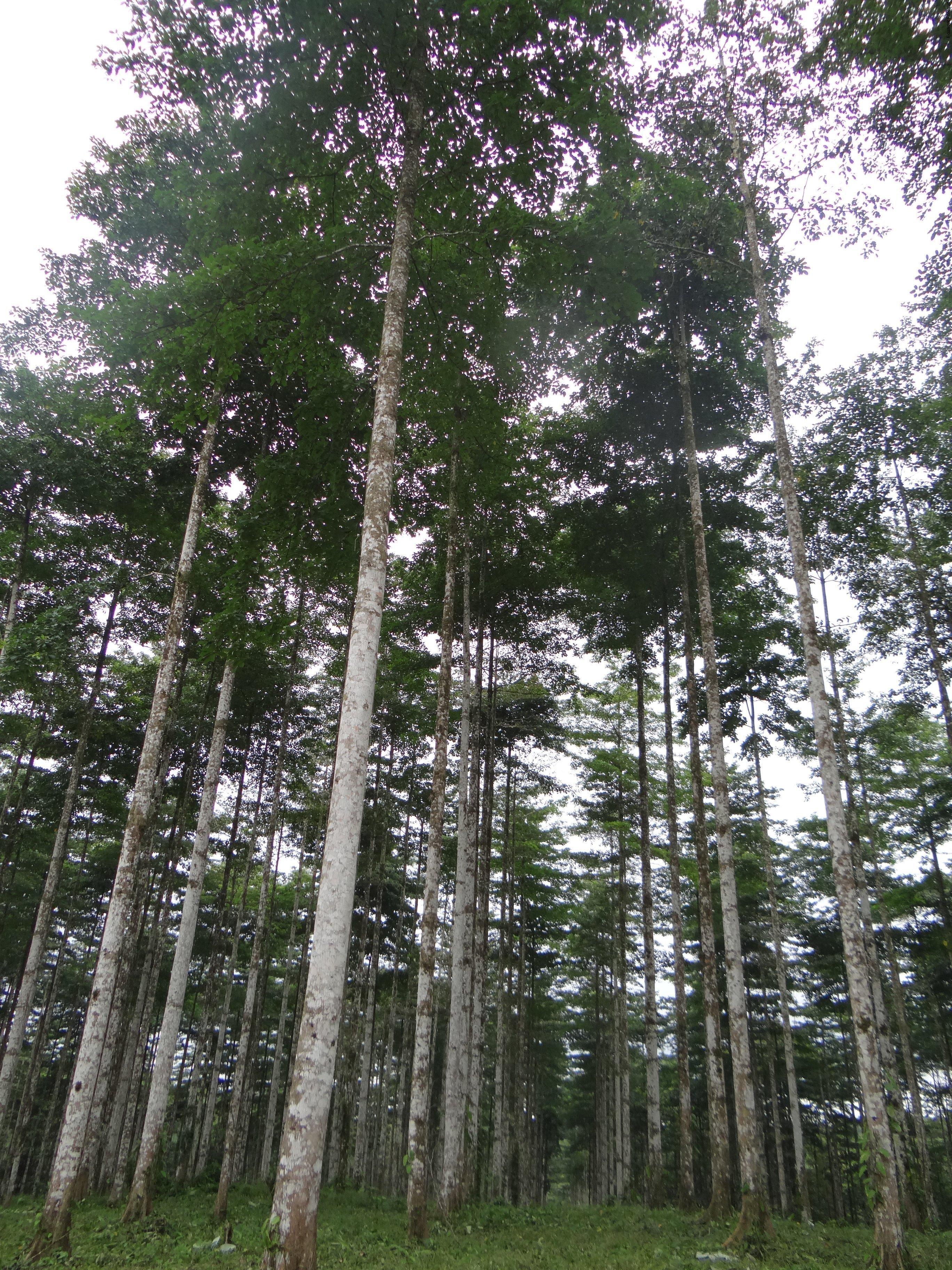 Bosques de Botrosa
