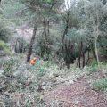 Es importante gestionar bien los bosques para generar agua subterránea