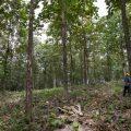 Ecotopia Teak, empresa forestal de Panamá