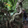 El shuar cuida su bosque