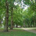 Se sembrarán 49.000 árboles en Londres