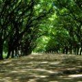 Valorar los árboles para crear ciudades más verdes y saludables
