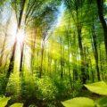 La mejor tecnología para combatir el cambio climático son los bosques