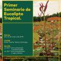 El Eucalipto Tropical, una especie del futuro para el sector forestal del Ecuador