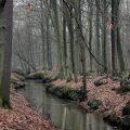 Los bosques frenan, de momento, el aumento de CO2 y el cambio climático