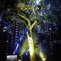 Bosque de Luz, en el centro del mundo