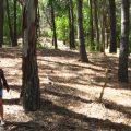 Arrancó el Seguro Verde: se plantaron más de 7 millones de árboles