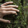 Bosques y educación, catalizadores para transformar nuestro mundo
