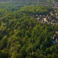 La ONU propone crear bosques urbanos para hacer frente al cambio climático