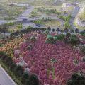 1 000 árboles para el nuevo bosque de Arupos