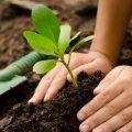 1´250.000 árboles ha plantado la Corporación de Manejo Forestal Sustentable junto a varias organizaciones e instituciones a nivel nacional