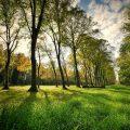 Ecuador recibirá fondos para el cuidado de los bosques y la producción forestal sostenible